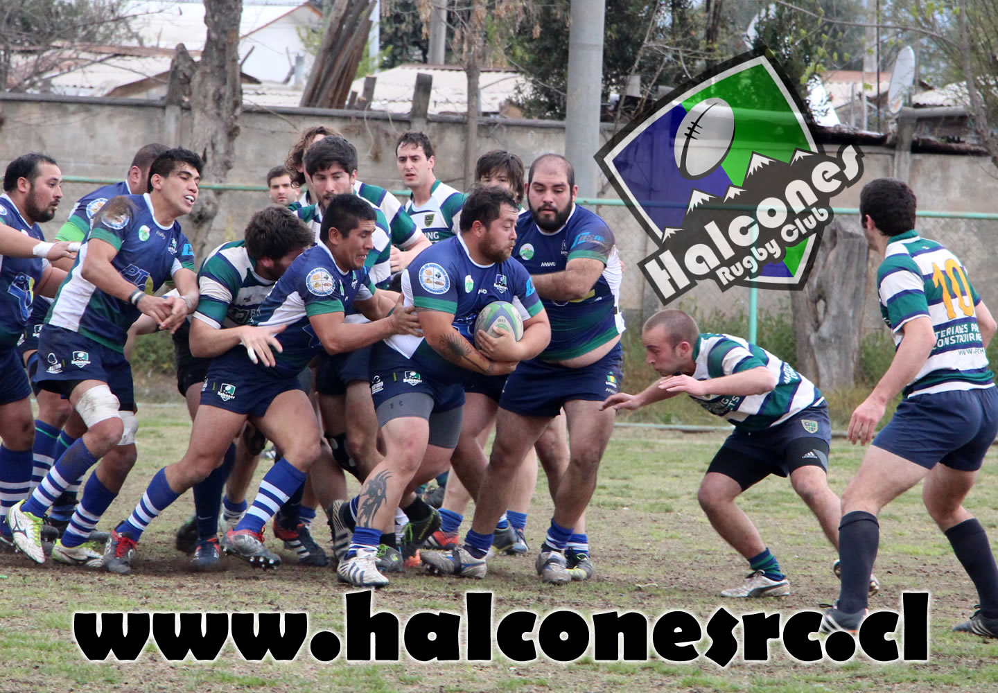 Halcones Rugby ClubHalcones Rugby Club